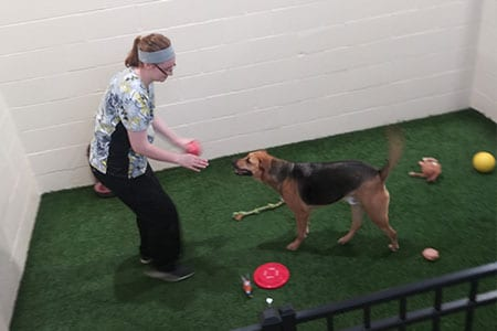 dog playing with vet tech